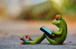 frog-914527_640